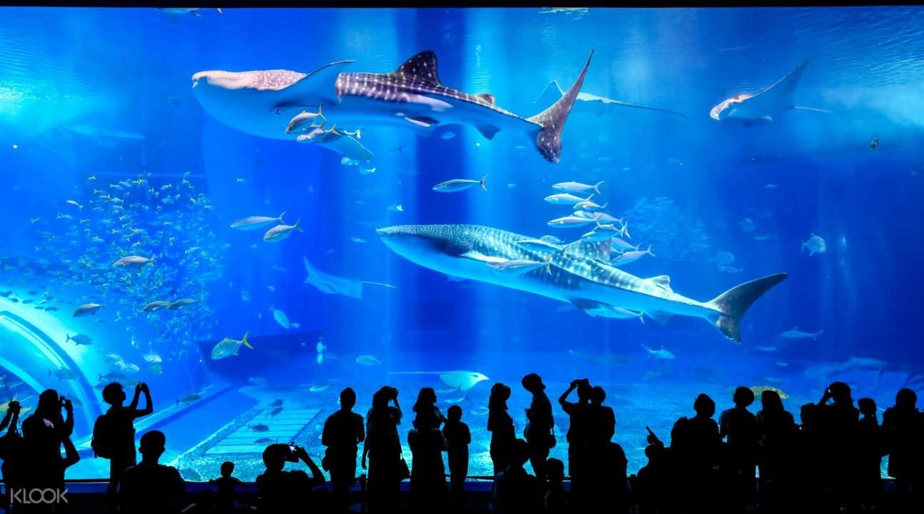 Charaumi Aquarium Okinawa